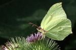 mariposacerrada