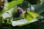 mariposacerrada2