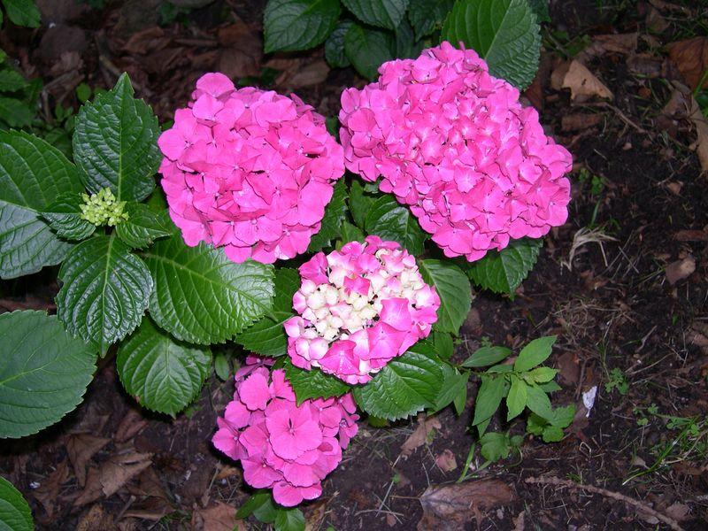 Flores del jardin mariae - Plantas exteriores todo el ano ...