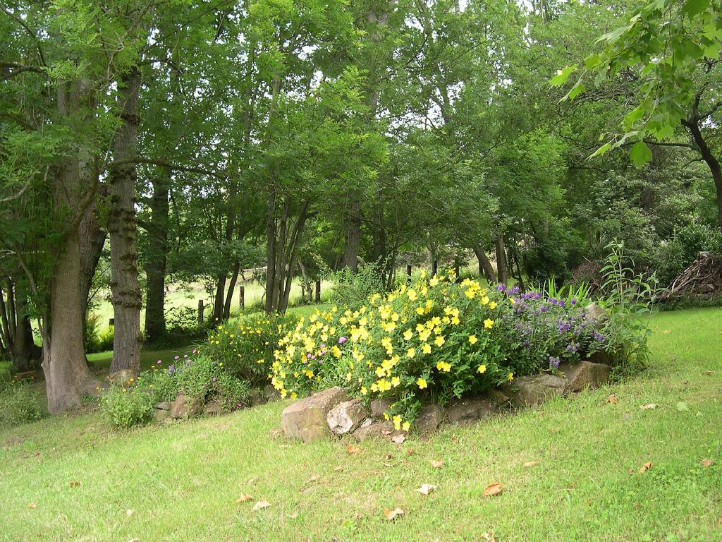 Arboles del jardin mariae - Arboles para jardin ...