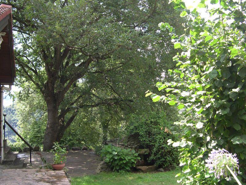 Arboles del jardin mariae for Arboles de sombra para jardin