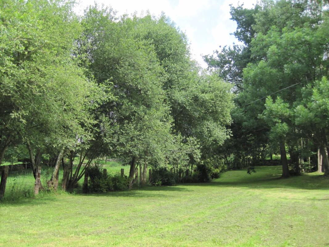 Arboles del jardin mariae for Arboles de jardin fotos