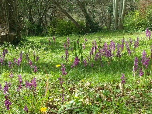 orquideas jardin